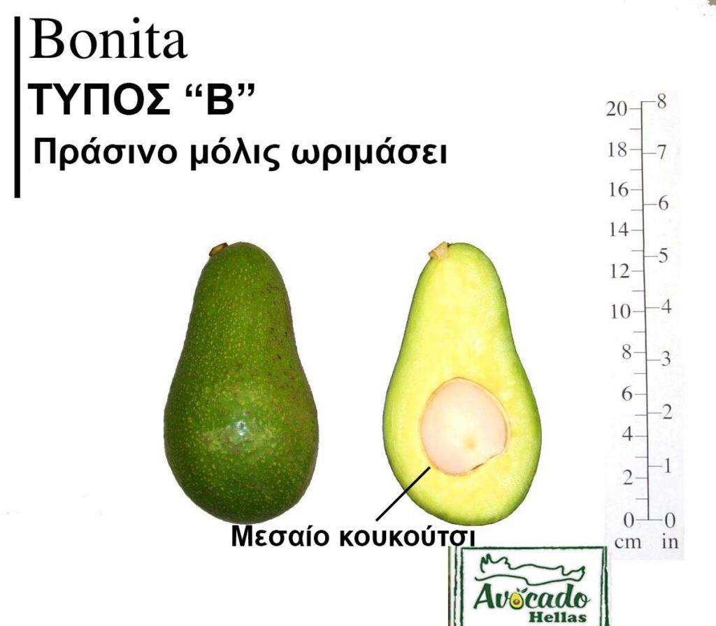 Ποικιλία Αβοκάντο Κρήτης Bonita