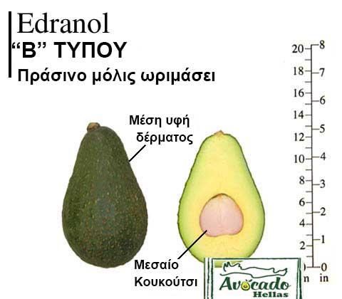 Variety Avocado Edranol