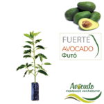 avocado-fuerte-fyto-xondriki-timh-fytorio-SM