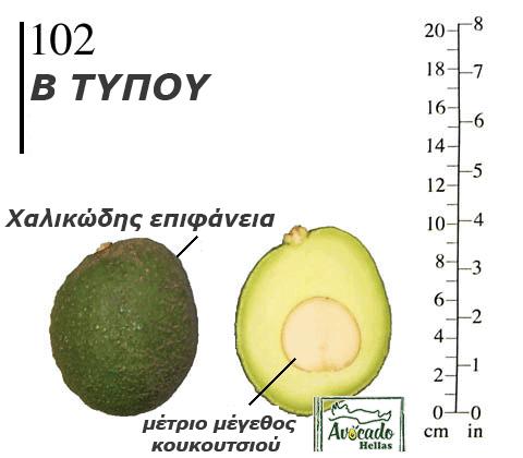 Ποικιλία Αβοκάντο 102 - Χανιά Κρήτη- Ελλάδα