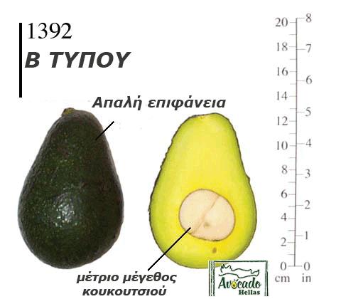 Ποικιλία Αβοκάντο (Avocado) #1392 Χανιά Κρήτης Ελλάδα