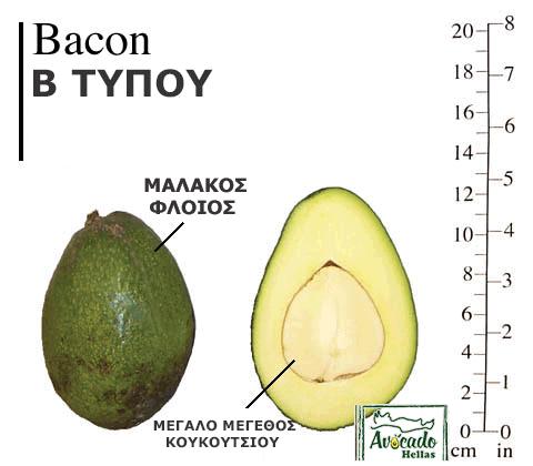 Ποικιλία Αβοκάντο (Avocado) bacon Χανιά Κρητης Ελλάδα.