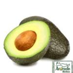 reed-avocado-chania-crete-greece