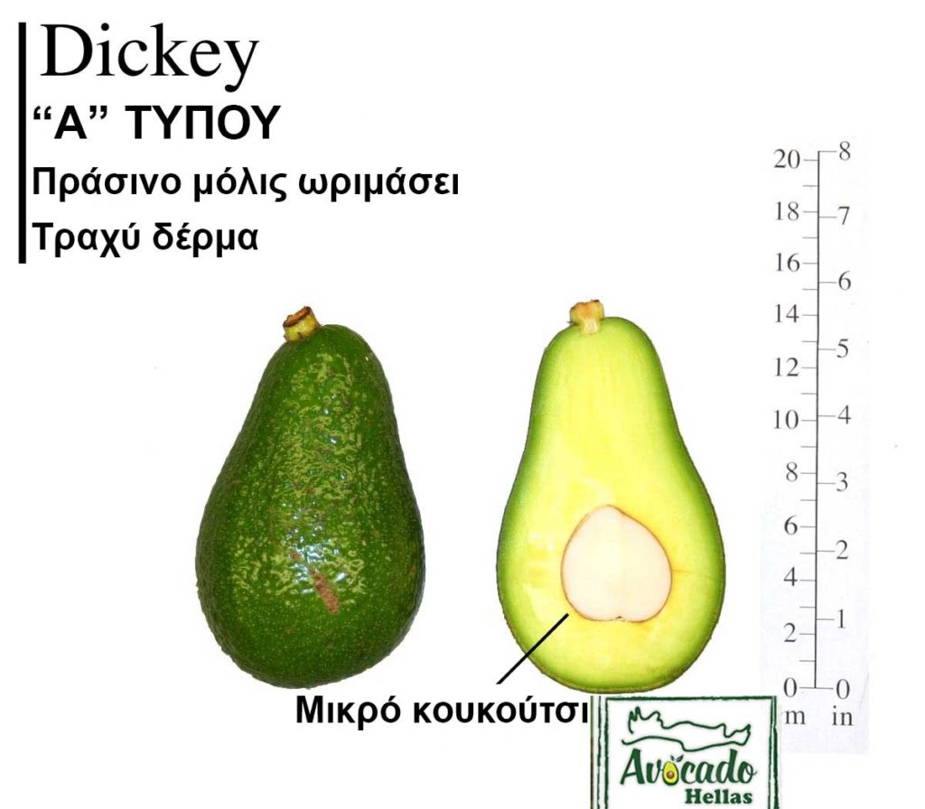 Ποικιλία Αβοκάντο (Avocado) Dickey