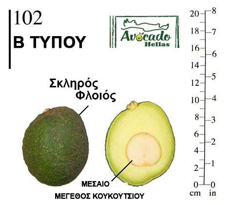 102 ποικιλία αβοκαντο