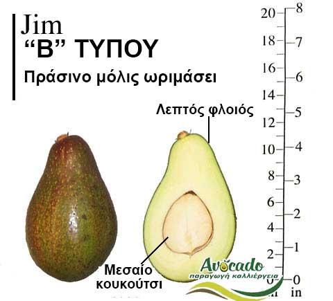Avocado Variety Jim