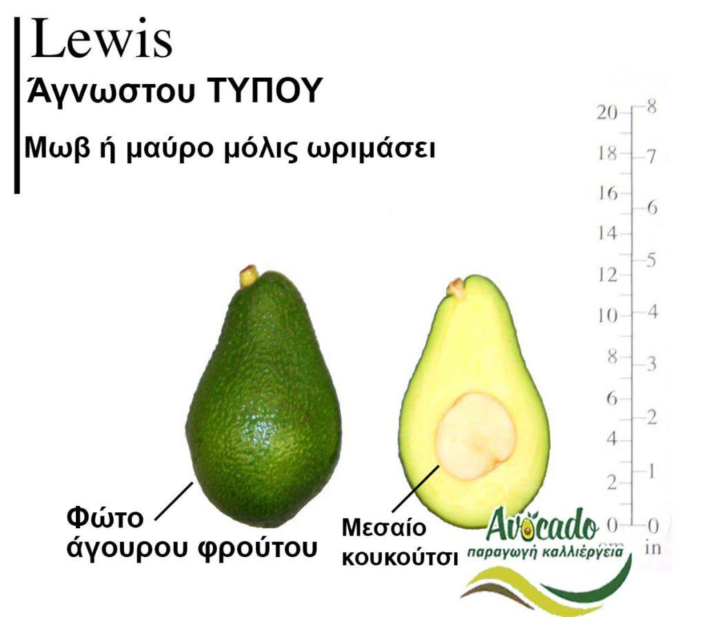 Lewis Avocado Variety