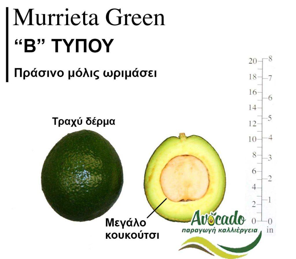 Variety Avocado MurrietaGreen