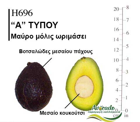 Ποικιλία Αβοκάντο Κρήτης Η696, Ποικιλία Αβοκάντο (Avocado) Η696, Avocado-Crete