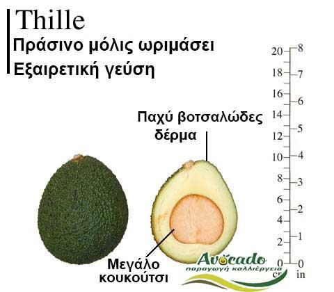 Variety Avocado Thille