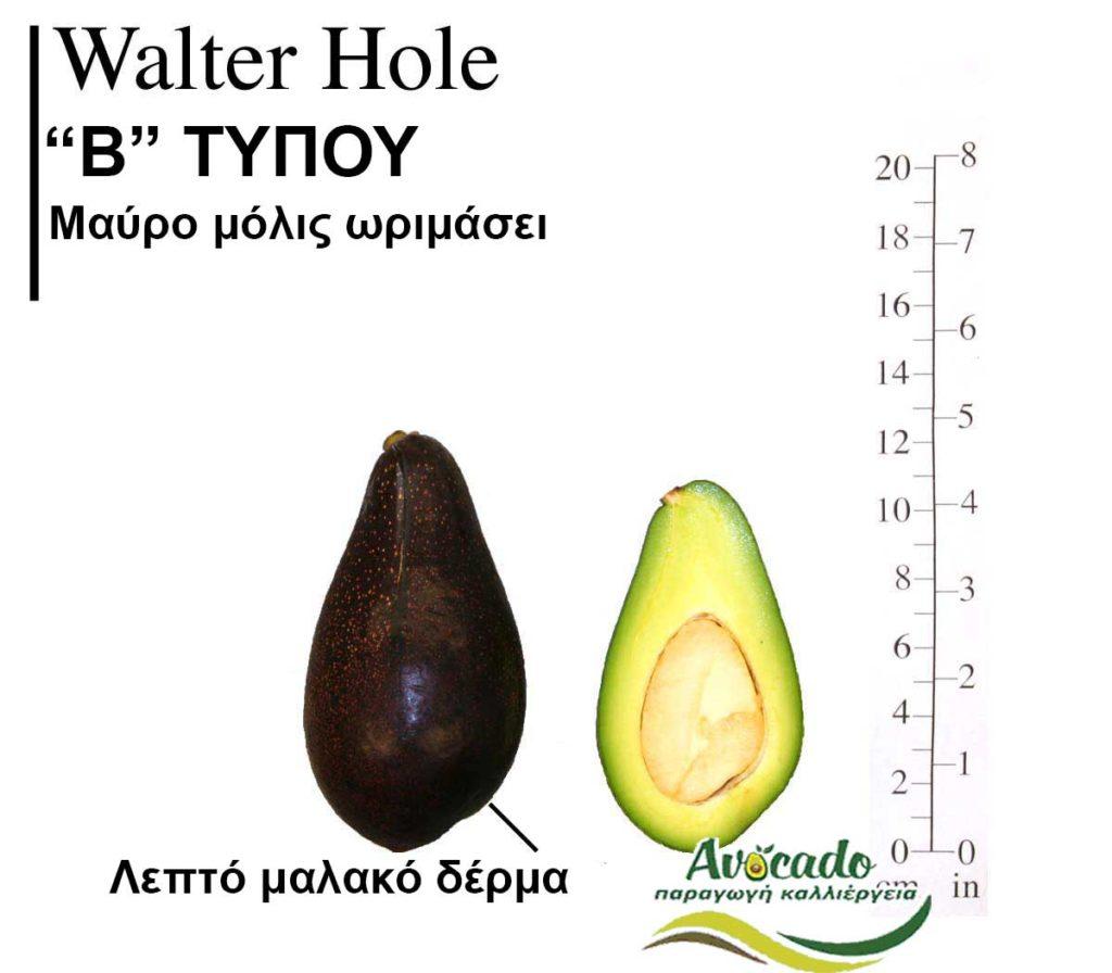 Avocado Variety WalterHole