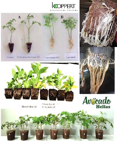 Πρόληψη-θεραπεία-ριζικού-συστήματος-φυτών-δεντρων-Ανοσοθεραπεία